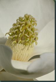 magnolia7 0607