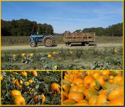 pumpkin ride collage