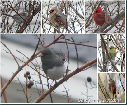 birds in tree collage