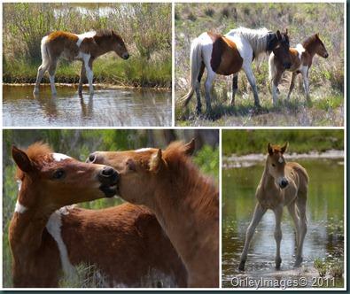 pony collage
