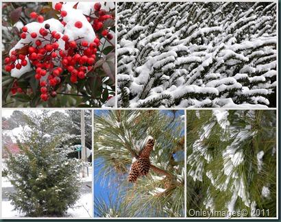 snowfall collage021011