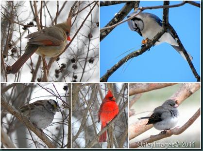 bird collage021011