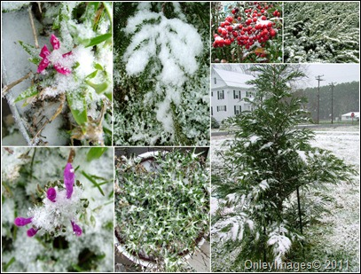 snow plants collage0327
