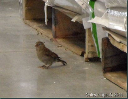 lowes birds031311 (1)