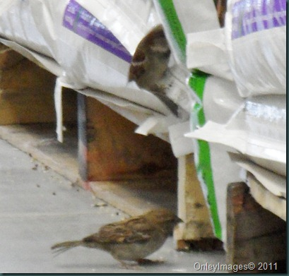 lowes birds031311 (12)