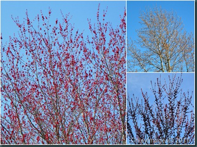 trees blooming0311