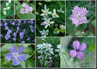 flowers assorted collage0502