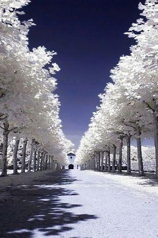 Snow Road Picture iPhone Desktop Wallpaper