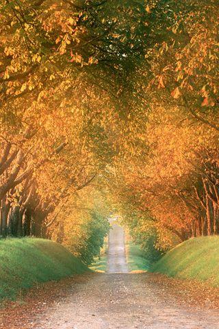 Autumn Road iPhone Background