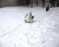 Winter Storm Jan 2010 033