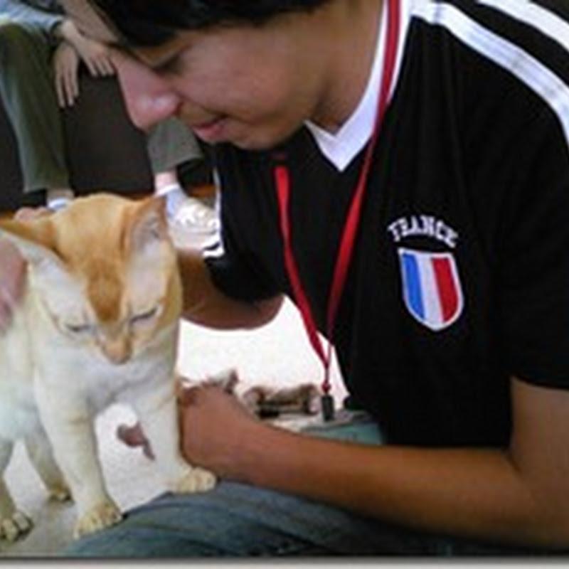 Tienda de gato, 猫の店