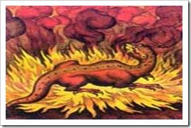 FireSalamander