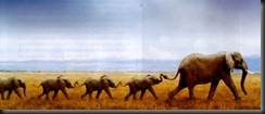 elephants-tm