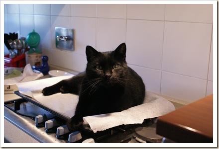 PIC - Un gatto nero nero