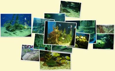 View Manila Ocean Park