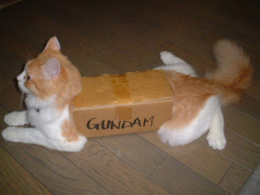 Funny Cats xD , Around The World