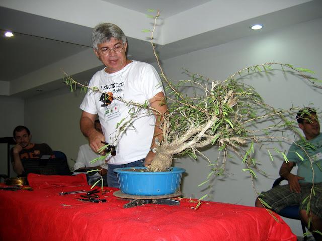 EVOLUÇAO DE UM PROJETO COM UMA CALIANDRA SPINOSA IMG_4581