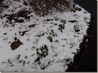 sadie and the snow 004