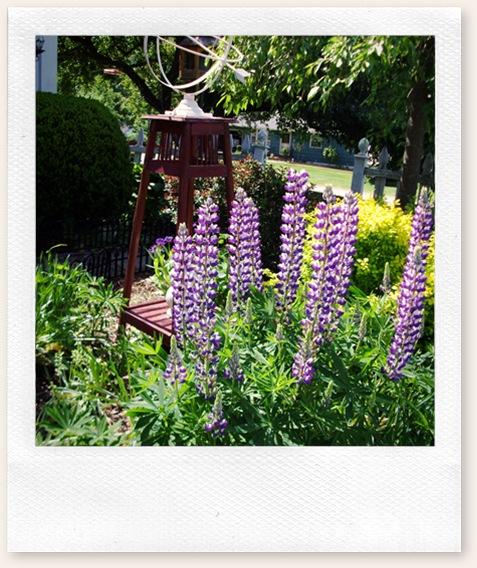 herb garden june09 014