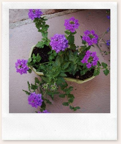 herb garden june09 017