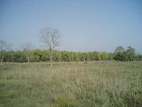 Kanha Meadow4.jpg
