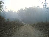 Kanha Drive4.jpg