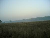 Kanha Meadow7.jpg