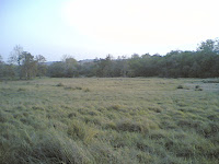 Kanha2 Meadows.jpg