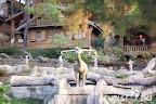 Фото 3 Naturland Forest Resort ex. Vera Forest Resort
