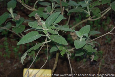 795 Bº del Laurel(Salvia de los Tiles)