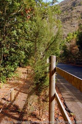 1400 Camino de la Laurisilva(Brezo)