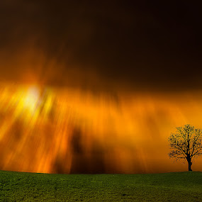 Fire by Ivan Bertusi - Landscapes Sunsets & Sunrises ( red, tree, colors, alone, fire )