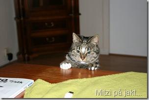 Mitzi 038