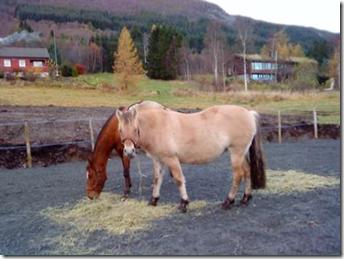 Lea og Sugar i sitt nye vintergjerde laurdag