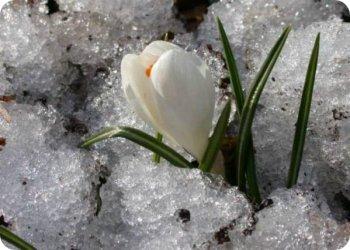 фото С наступлением весны!