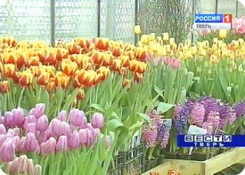 """""""Неделя тюльпанов"""" в Твери"""