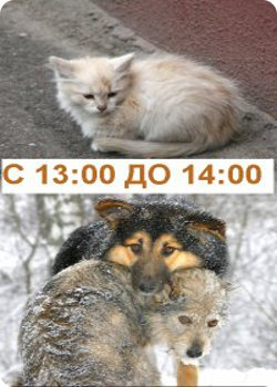 """26 сентября - Акция """"Поможем животным вместе"""""""