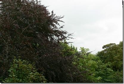 P1320339