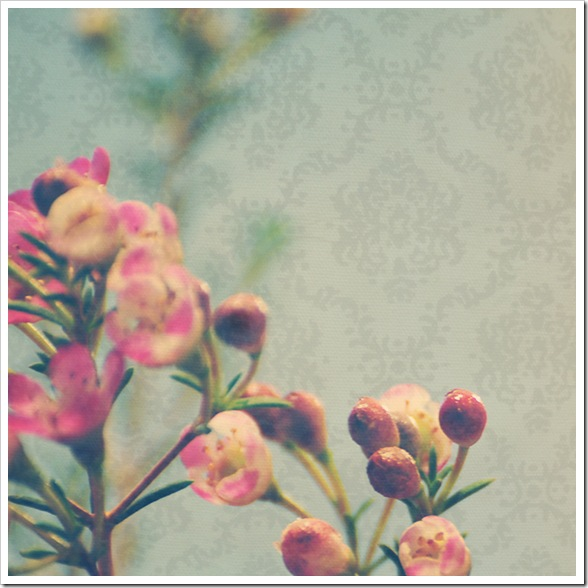 flowers222010web