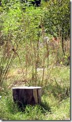 resting stump