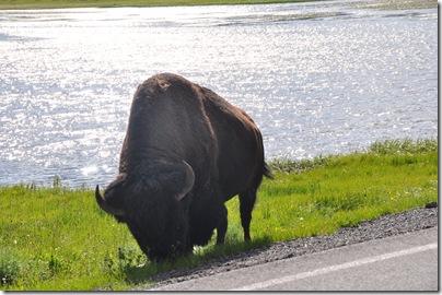 Yellowstone 2009 218