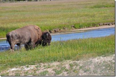 Yellowstone 2009 042