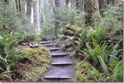 Hoh Rain Forest 067