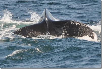Cape Cod, MA 140