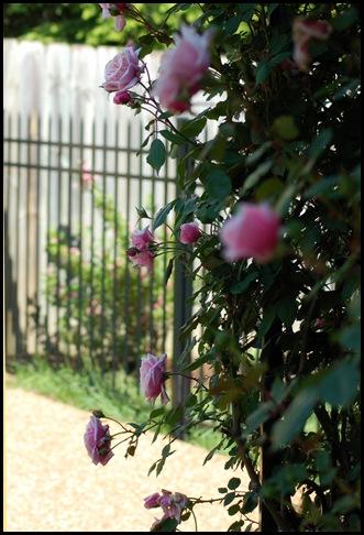 rose trellis side view