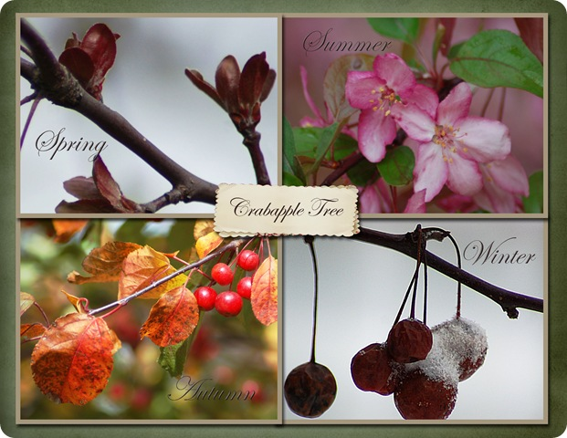 collage of crab apple tree copy