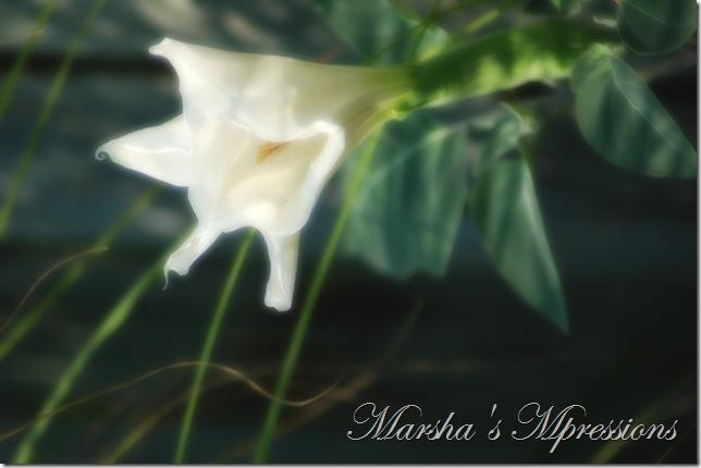 blossom blurred
