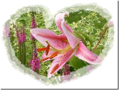lilies 005