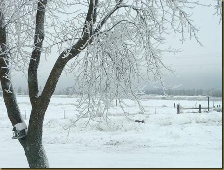 2010 snow 015