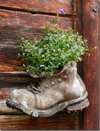 plant-shoe6-lg